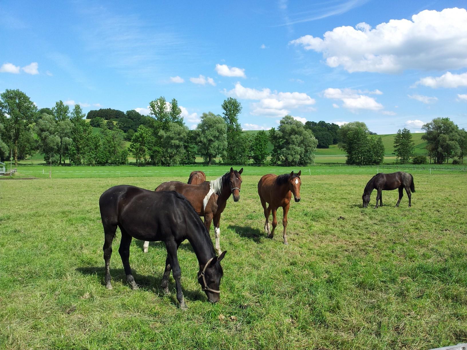 Senior Horse Evaluations  Marietta, PA